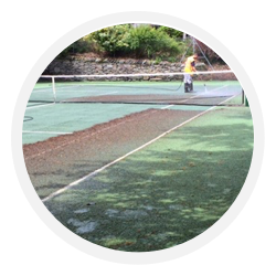 moss_algae